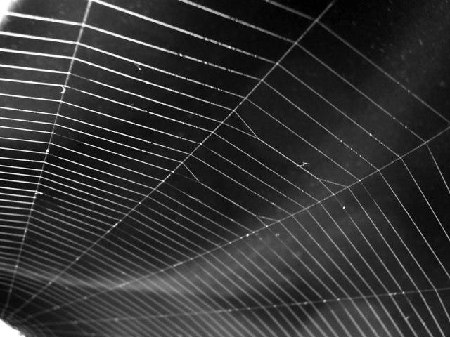 (180)_Spider_web